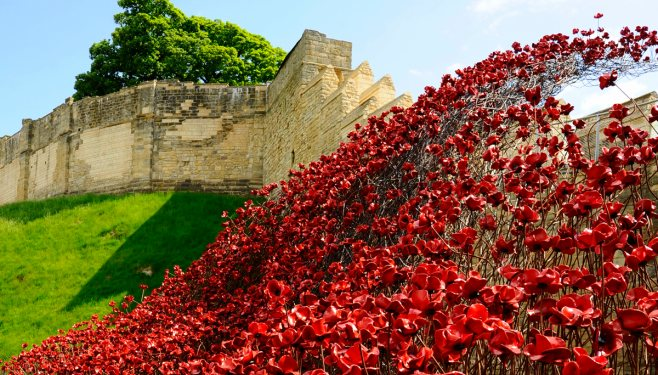 lincoln_poppies